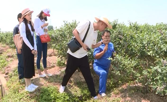 今天要跟郑宏伟进行技术交流的,是小岗现代化农业进程中的先行者之一时志军。这位利用秸秆种植蓝莓的创新者,正是靠着大包干精神的指引,不断在创新的道路上前行。