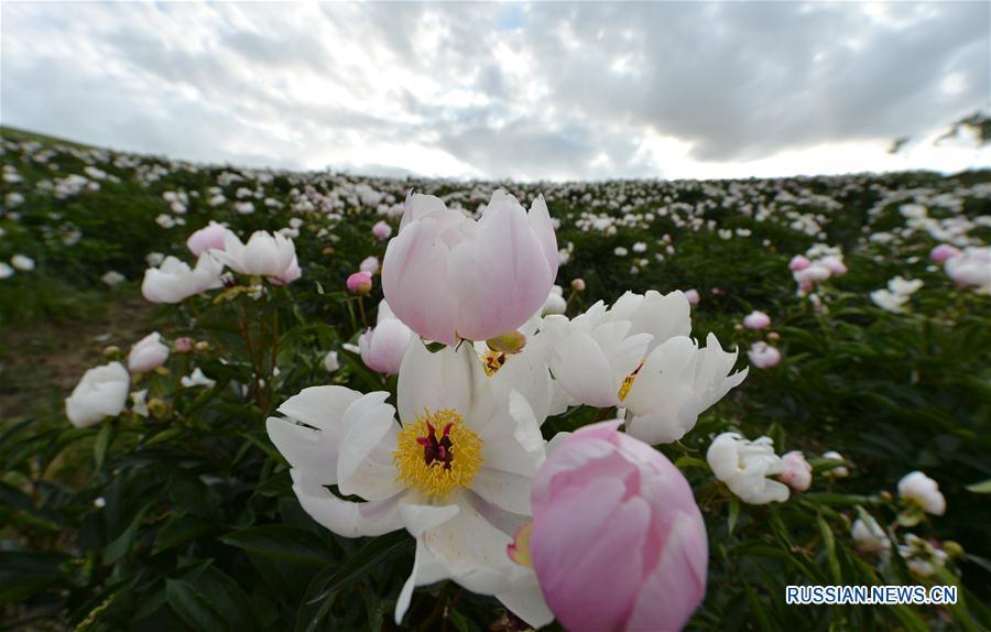 Вид степей Шилин-Гола летом
