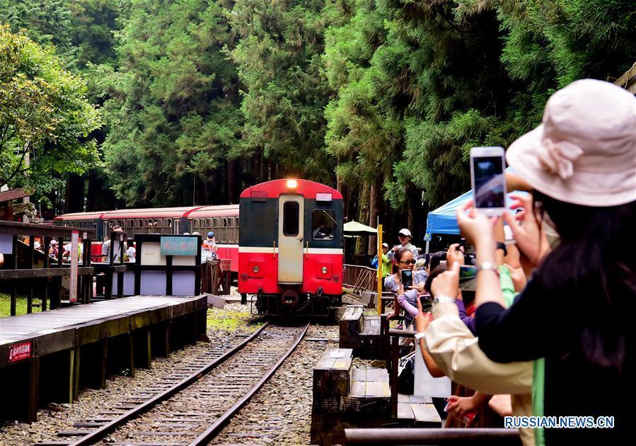 Спасение от летнего зноя в тайваньских горах Алишань