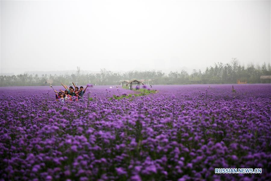 Цветочное море Мабянь в Циндао