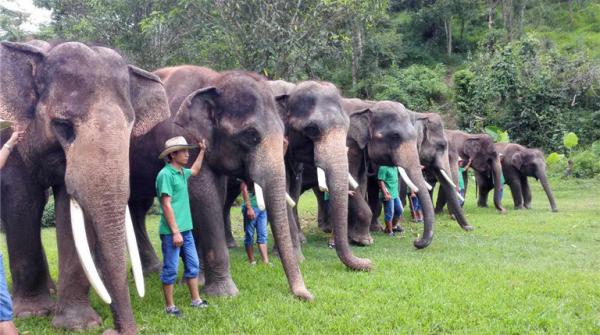 鼻子的大象的数量