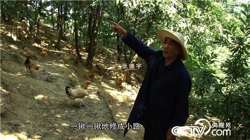 62岁因为一个秘密进山养鸡