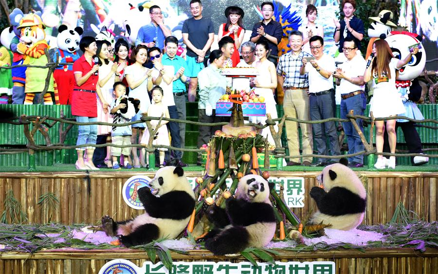 Giant panda triplets Mengmeng, Shuaishuai and Kuku eat bamboo shoots and carrots at their birthday party in Guangzhou, capital of south China