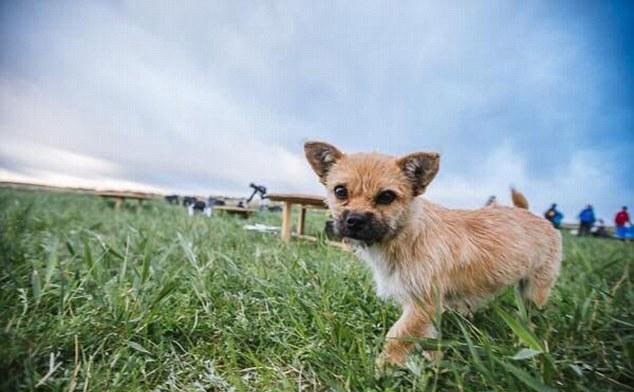 """The adorable pooch, who was named """"Gobi"""" by the runners, is only about 18 months old."""