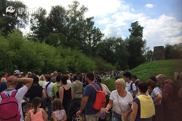 """看望旅居比利时大熊猫""""好好""""及幼仔游客 图 中国大熊猫保护研究中心提供"""