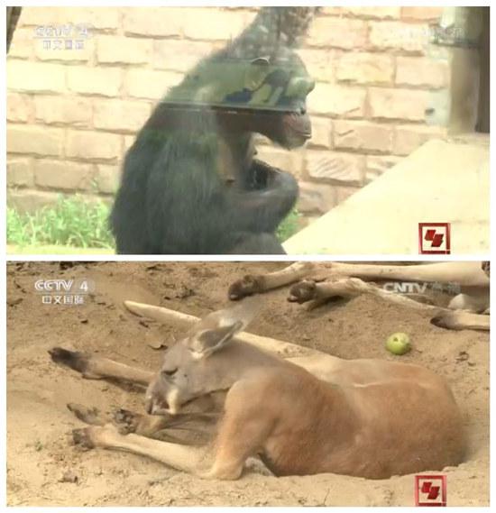 北京野生动物园人工育幼室里萌宠大聚会