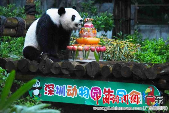 """动物园为大熊猫""""娇庆""""准备了水果""""蛋糕"""""""