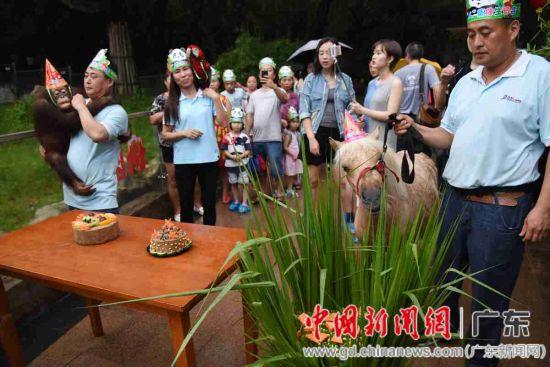 """动物园里的红毛猩猩、鹦鹉、珍珠马亲临""""动""""""""人""""生日会现场"""