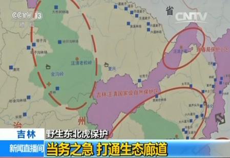计划在吉林,黑龙江两地建立东北虎豹国家公园图片