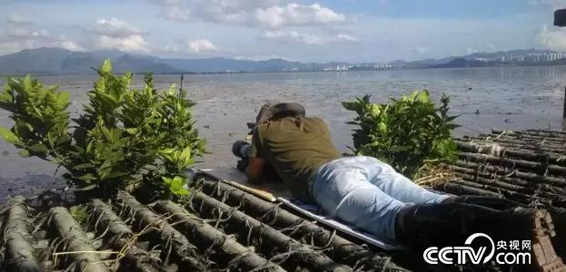 《野性深圳-红树林的生物钟》剧照