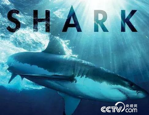 《鲨鱼》剧照