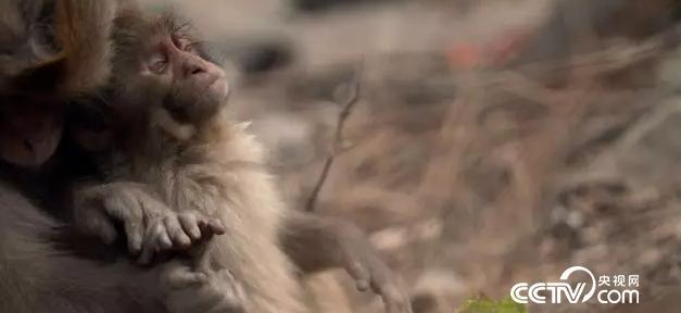 《盲猴岁月》剧照