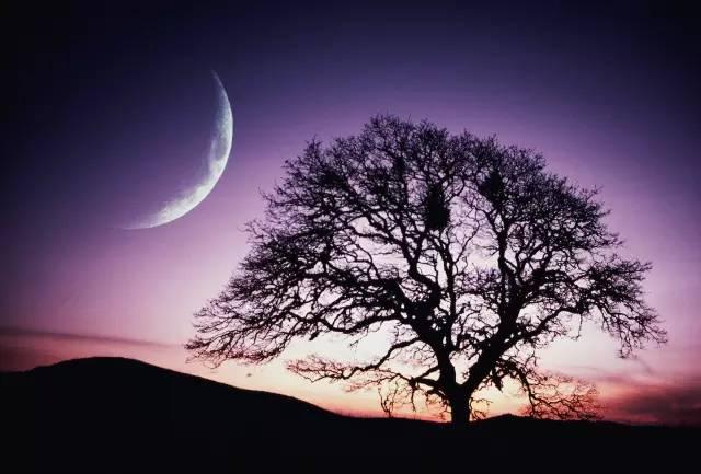 夜读:月亮代表我的心