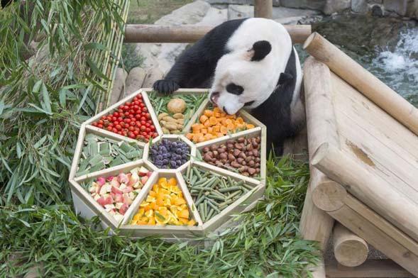 中秋将至 旅韩大熊猫享节日美食