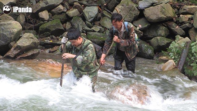 工作人员不畏艰险 横渡深河(图:白水江保护区提供)