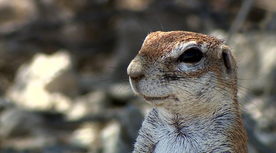 《自然传奇》非洲小动物(9月19日)