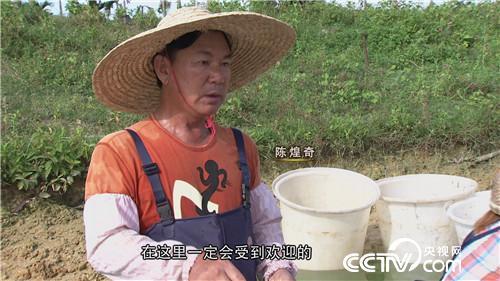 台湾商人抓住滑溜溜的财富