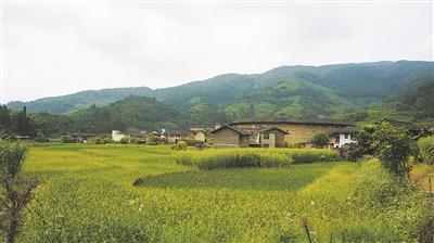 房前屋后稻田连片