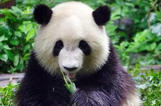大熊猫七巧