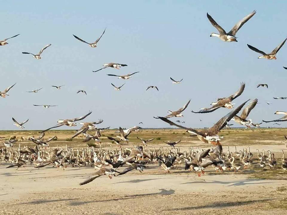 第七届中国通榆向海大雁放飞文化节隆重举行