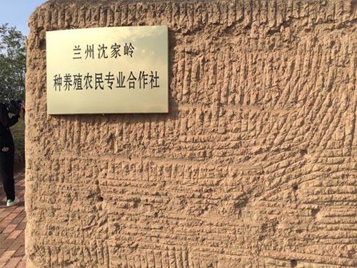 兰州沈家岭种养殖农民专业合作社。中国干部学习网 张倩楠 摄