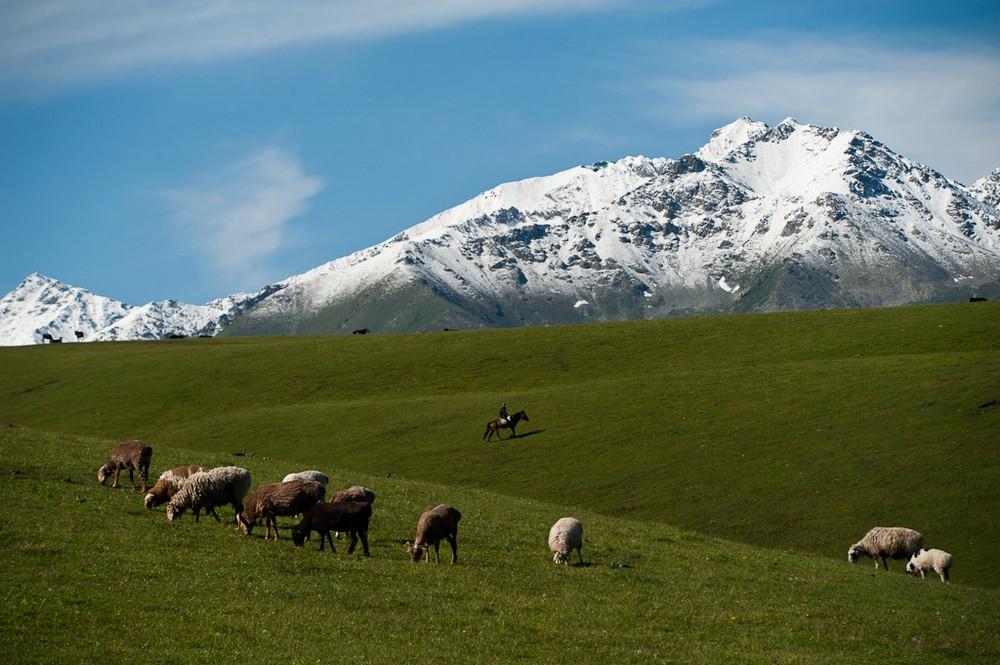 Les nomades Kazakhs doivent changer leur mode de vie