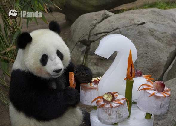 """大熊猫""""美生""""在美国"""