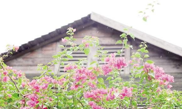 中国风秋天果树壁纸