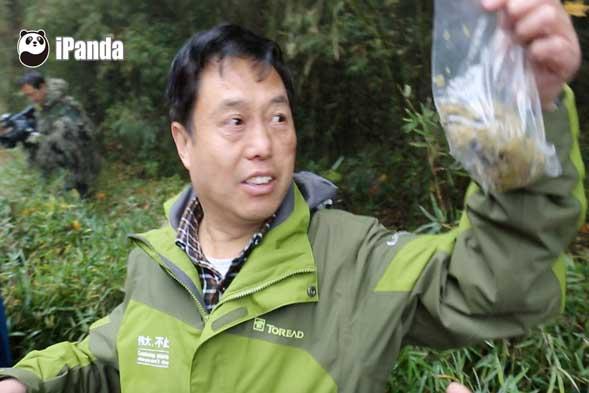 周世强现场采集放归大熊猫的粪便
