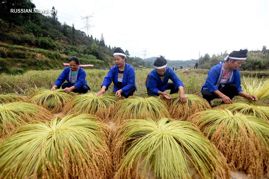 Состязания жниц в уезде Саньцзян
