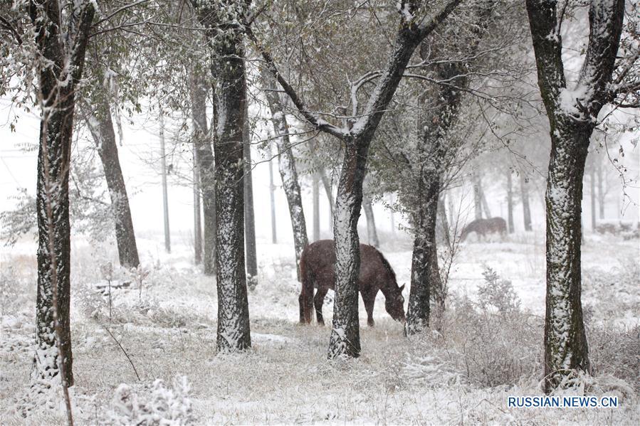 Снегопад в провинции Хэбэй