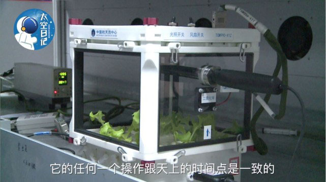 Lettuce grows in the Tiangong-2 space lab. [Photo provided by Astronaut Center of China]