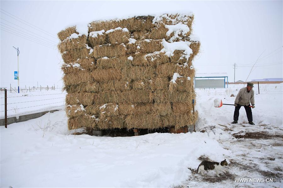 A worker clears snow at a pasture in Altay, northwest China