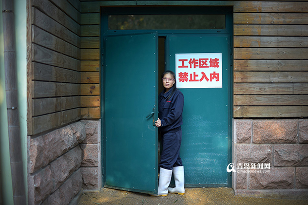 熊猫的护理非常严格,工作区域不仅不对外开放,连拍摄都是不允许的。