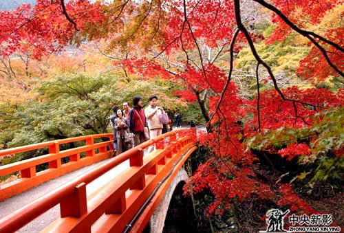 3d欧美红叶树风景图片