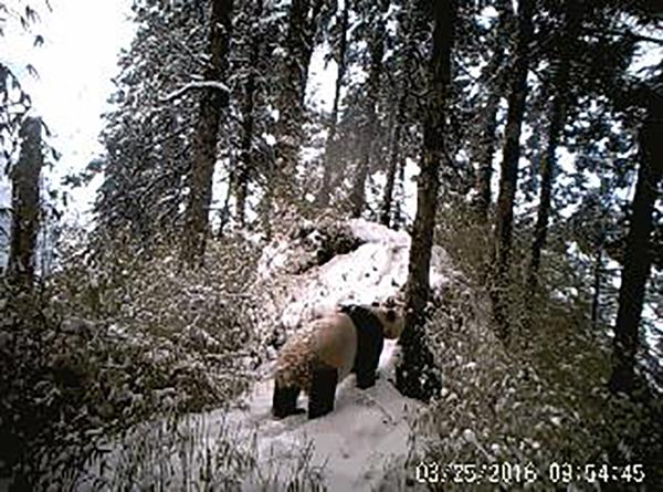 我并不冬眠,冬眠的是黑熊。