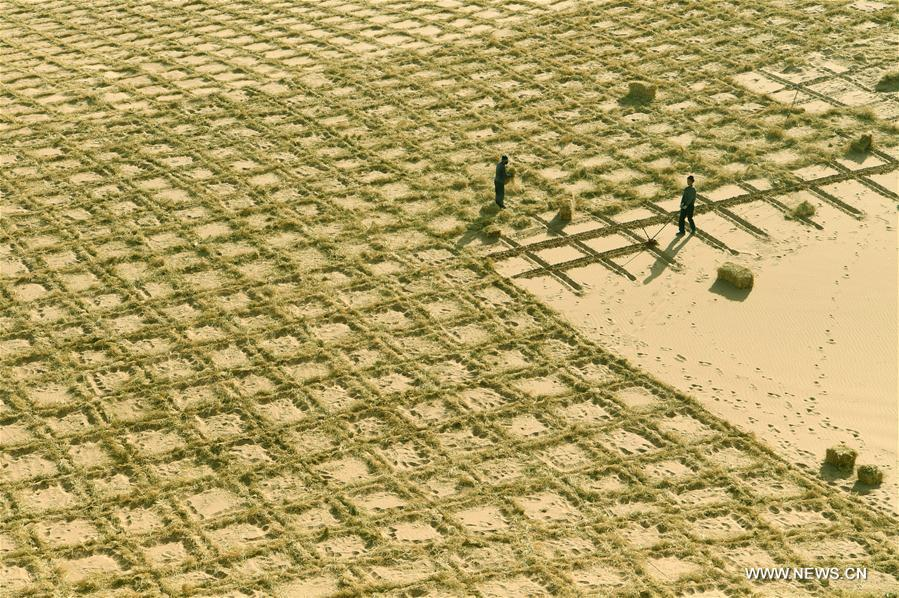 WUWEI, 20 novembre (Xinhua) -- Des paysans installent des barrières en foin pour stabiliser les dunes sableuses au district de Minqin, à Wuwei, dans la province chinoise du Gansu (nord-ouest), le 19 novembre 2016. Le gouvernement local a l