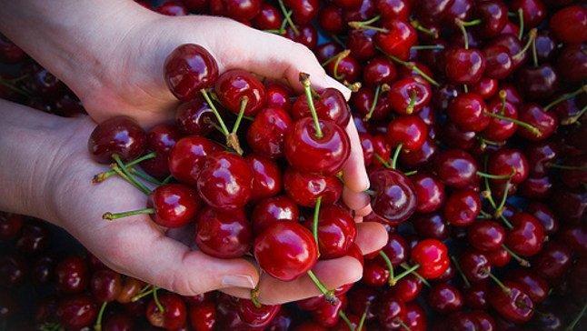 Las exportaciones de cereza crecen para satisfacer la demanda china