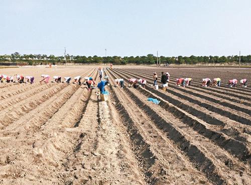 臺當局將擬大學公費生從農政策 每年三千人救缺工