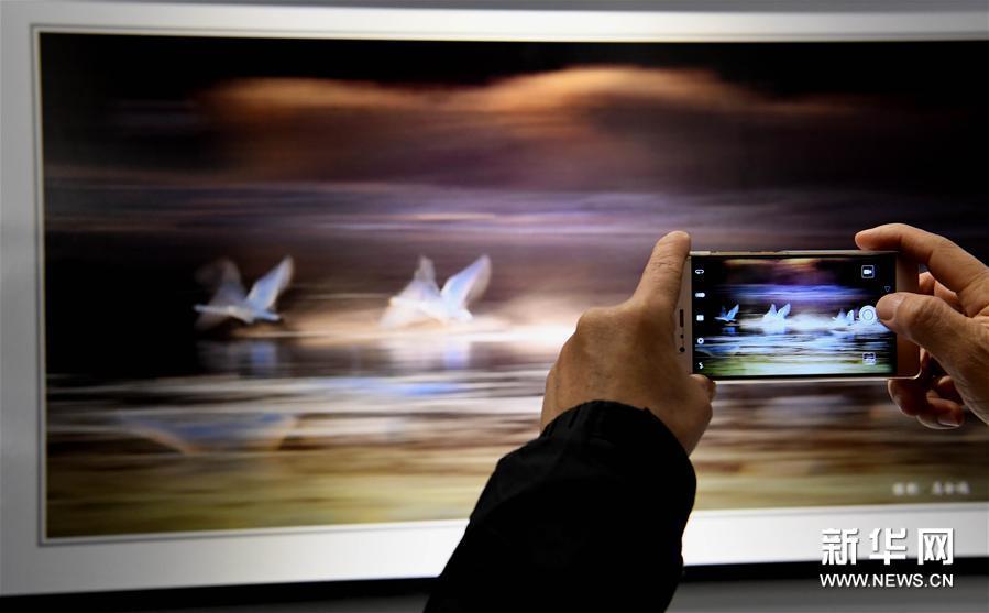 """Una exposición fotográfica promueve la """"ciudad de los cisnes"""""""
