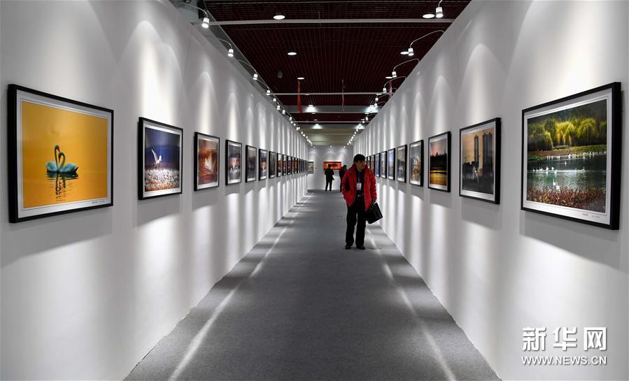 В провинции Хэнань стартовала международная фотовыставка лебедей и диких животных