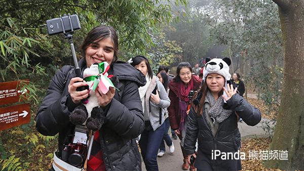 """""""熊猫粉丝""""参观成都大熊猫繁育研究基地"""