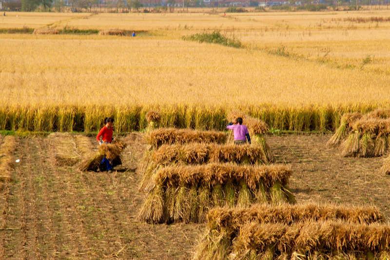 La reforma agrícola protegerá los intereses de los gestores de tierras cultivables
