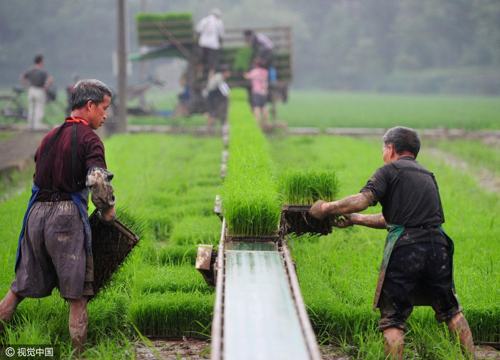 Gobierno establece apoyos políticos para el sector rural