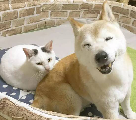 16-year-old dog Shino has Alzheimer