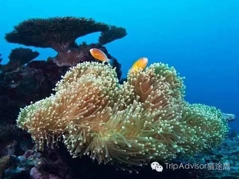 壁纸 海底 海底世界 海洋馆 水族馆 桌面 480_360