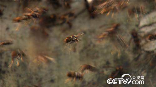 杀人蜂带来的千万财富(下)(2016.12.22)
