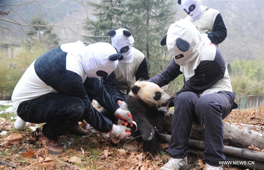 Du personnel, déguisé en pandas, contrôle la santé d