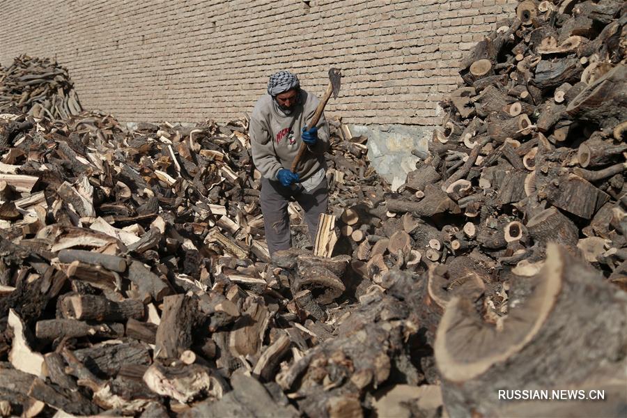Афганцы заготавливают дрова на зиму