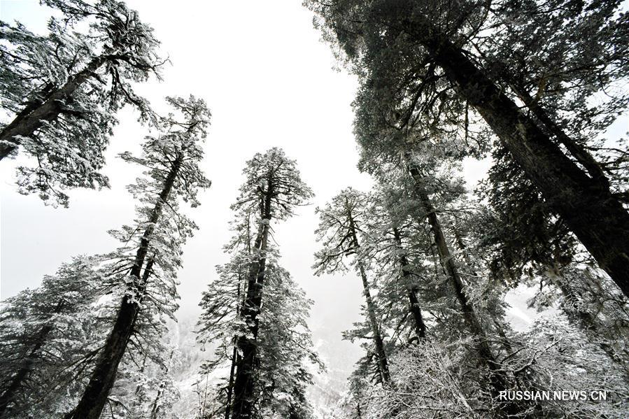 Зимние красоты уезда Медог